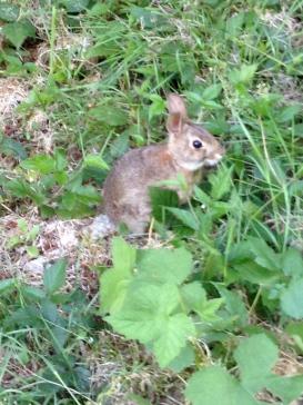 bunny in Surrey